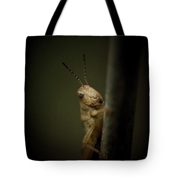 hop Tote Bag by Shane Holsclaw
