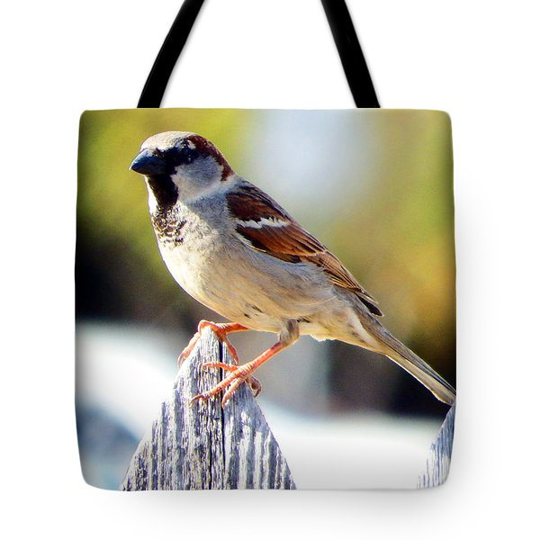 House Sparrow Tote Bag by David G Paul