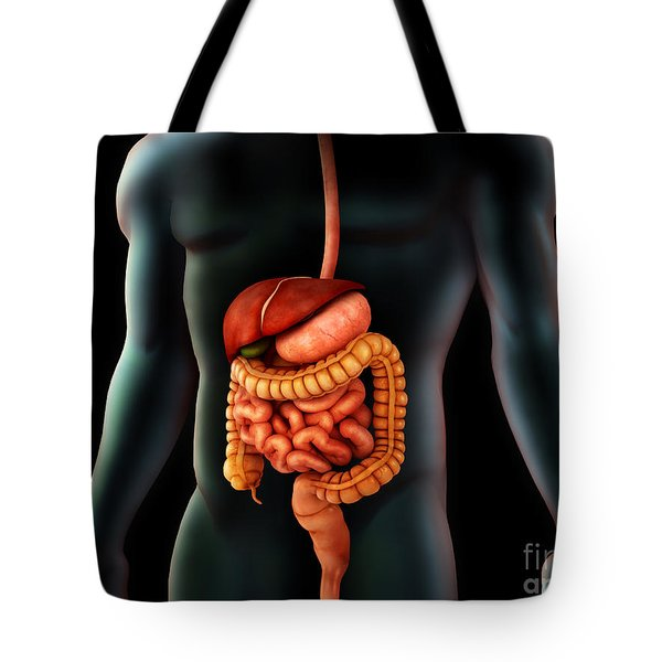 Human Body And Digestive System Tote Bag by Stocktrek Images
