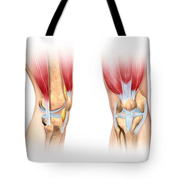 Human Knee Cutaway Illustration Tote Bag by Leonello Calvetti