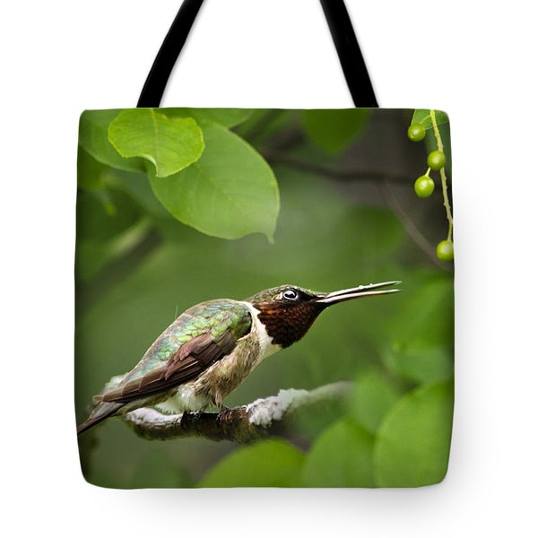 Hummingbird Hiding In Tree Tote Bag by Christina Rollo