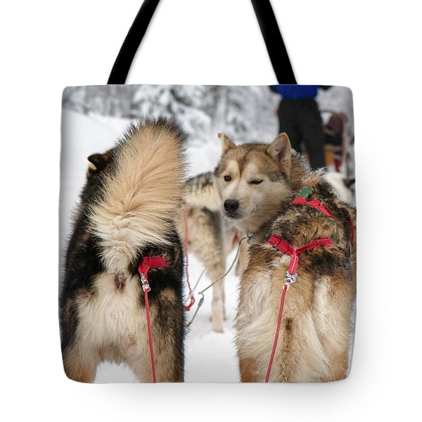 Husky dogs pull a sledge  Tote Bag by Lilach Weiss