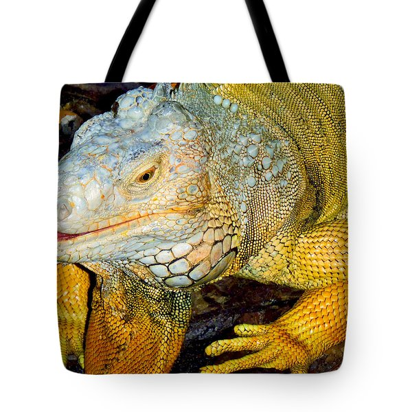 Iggy Tote Bag by Carey Chen