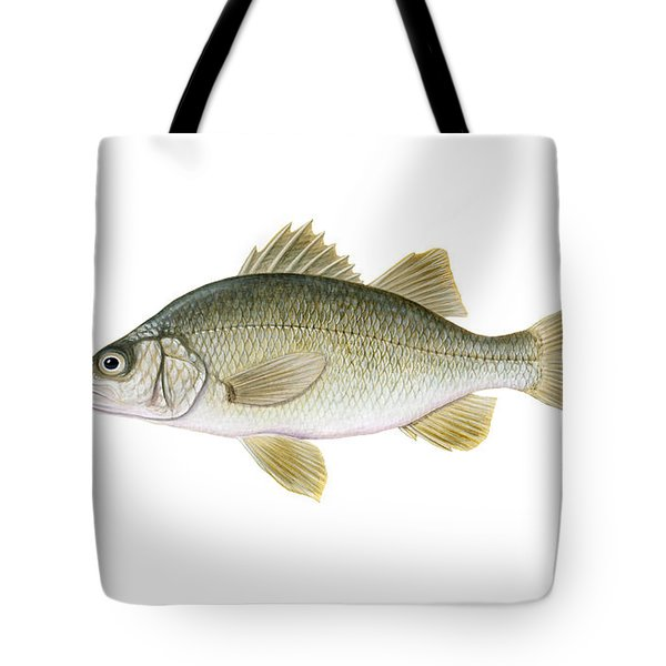 Illustration Of A White Perch Morone Tote Bag by Carlyn Iverson