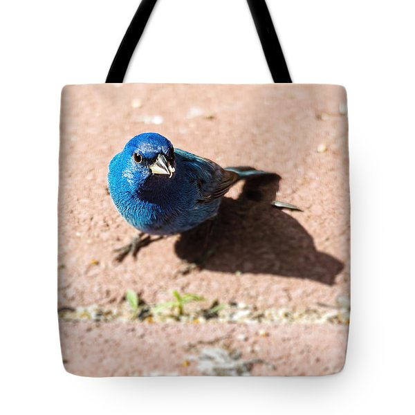 Indigo Bunting Tote Bag by Jon Woodhams