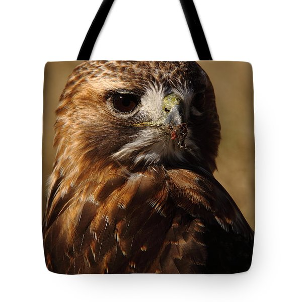 Red Tailed Hawk Portrait Tote Bag by Robert Frederick