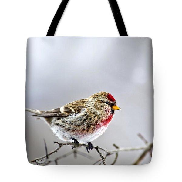 Irruptive Bird Common Redpoll Tote Bag by Christina Rollo