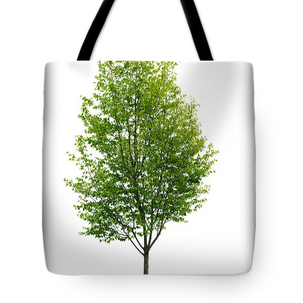 Isolated young tree Tote Bag by Elena Elisseeva