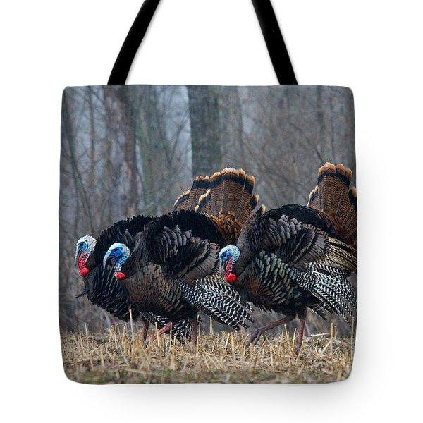 Jake Eastern Wild Turkeys Tote Bag by Linda Freshwaters Arndt