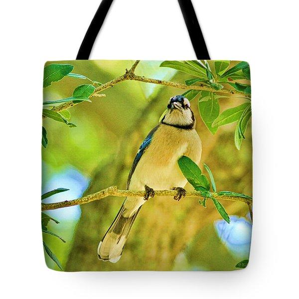 Jay In The Tree Tote Bag by Deborah Benoit