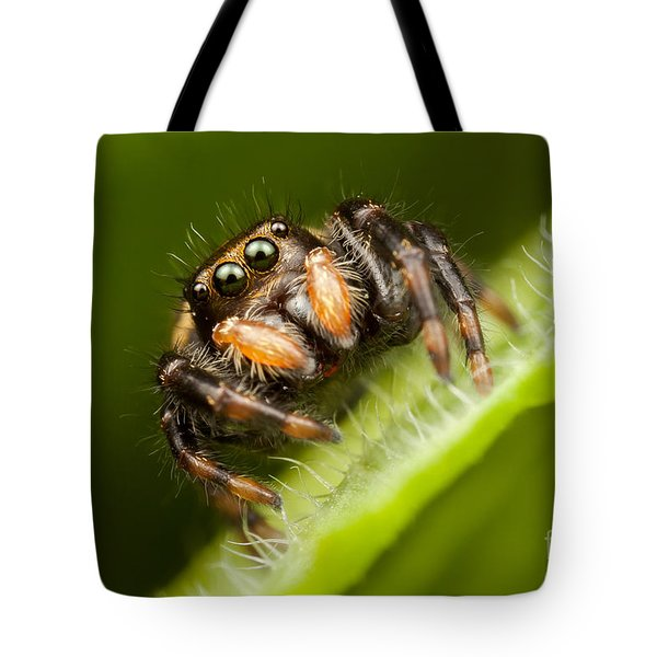 Jumping Spider Phidippus Clarus I Tote Bag by Clarence Holmes