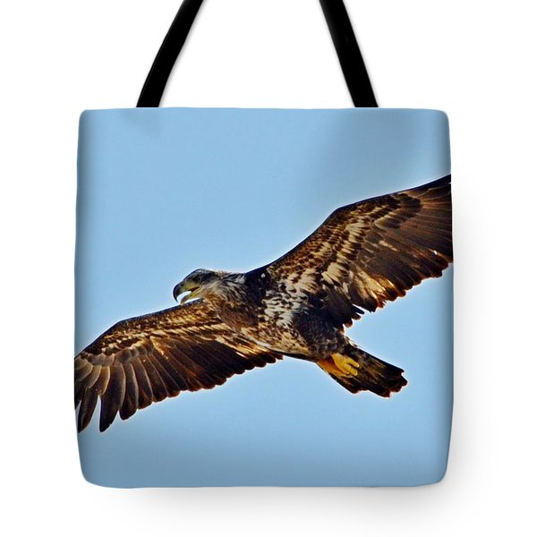 Juvenile Bald Eagle In Flight Close Up Tote Bag by Jeff at JSJ Photography