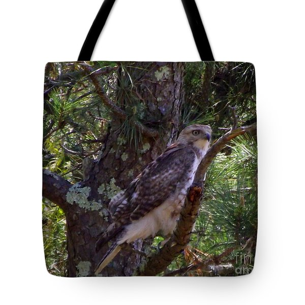 Juvenile Red-tailed Hawk Tote Bag by CapeScapes Fine Art Photography