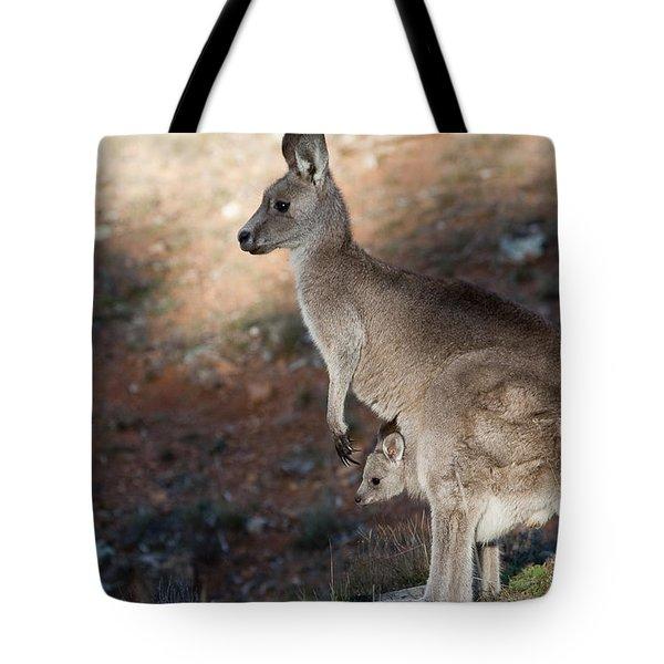 Kangaroo And Joey Tote Bag by Steven Ralser