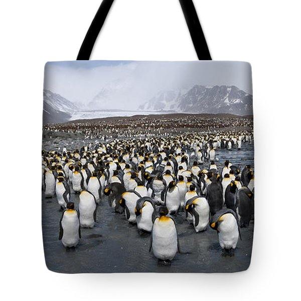 King Penguins Aptenodytes Patagonicus Tote Bag by Panoramic Images