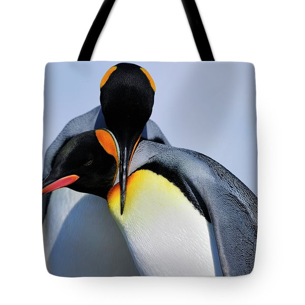 King Penguins Bonding Tote Bag by Tony Beck