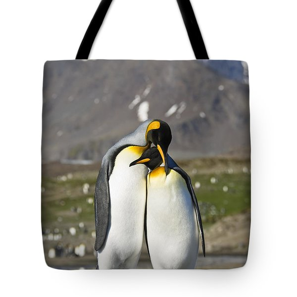 King Penguins Courting St Andrews Bay Tote Bag by Konrad Wothe