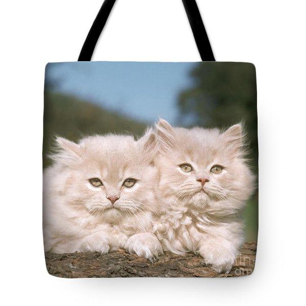 Kittens Tote Bag by Hans Reinhard
