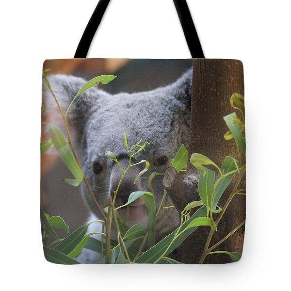 Koala Bear  Tote Bag by Dan Sproul