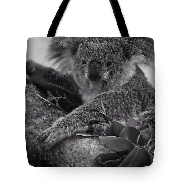 Koala Tote Bag by Chris Flees