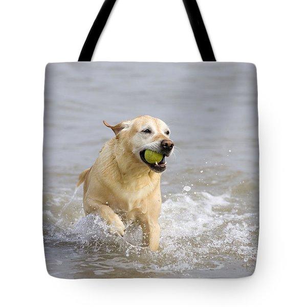 Labrador-mix Retrieving Ball Tote Bag by Geoff du Feu