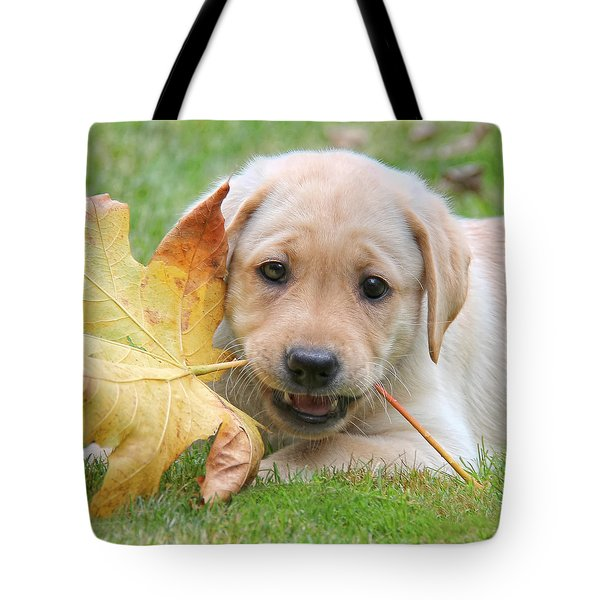 Labrador Retriever Puppy With Autumn Leaf Tote Bag by Jennie Marie Schell
