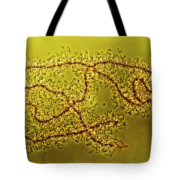 Lampbrush Chromosomes Newt, Lm Tote Bag by Science Source