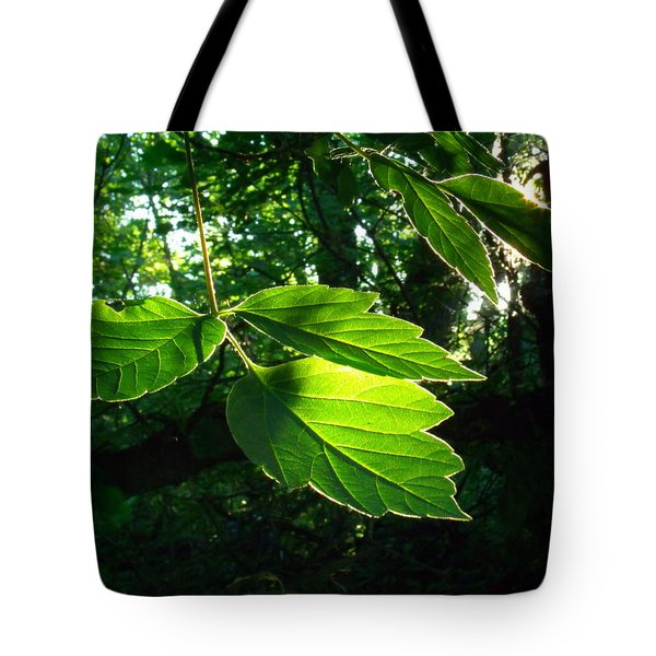 Last Rays Tote Bag by Jessica Myscofski