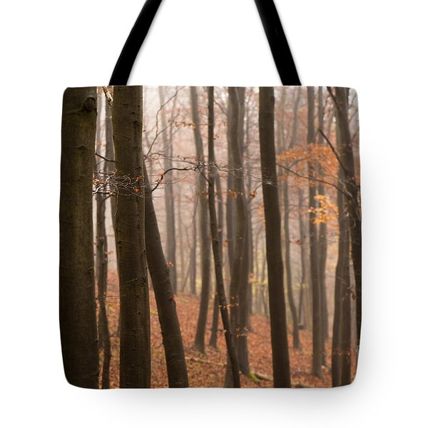 Late Autumn Beech Tote Bag by Anne Gilbert