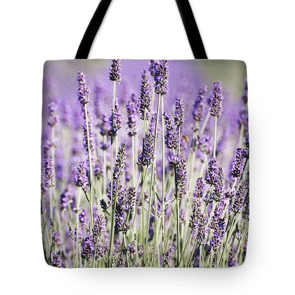 Lavender fields 2 Tote Bag by Anahi DeCanio
