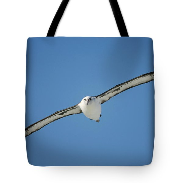 Laysan Albatross Soaring Hawaii Tote Bag by Tui De Roy