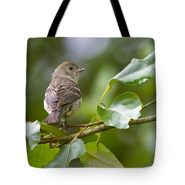 Lazuli Bunting Female 2 Tote Bag by Sharon Talson