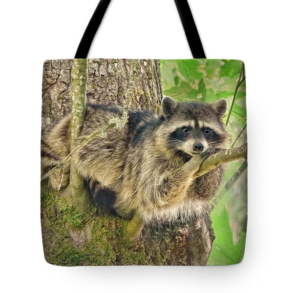 Lazy Day Raccoon Tote Bag by Jennie Marie Schell