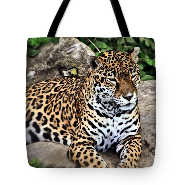 Leopard At Rest Tote Bag by Marty Koch