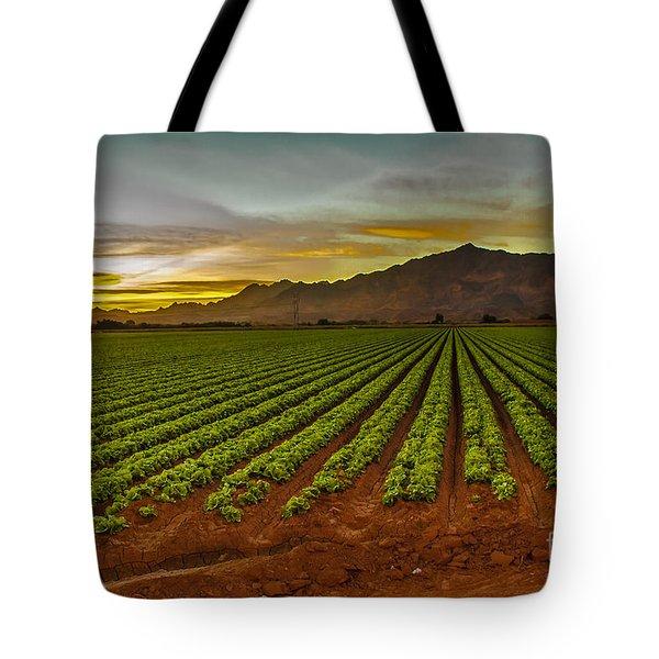 Lettuce Sunrise Tote Bag by Robert Bales