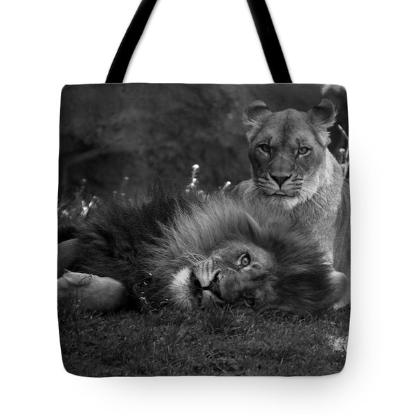 Lions Me And My Guy Tote Bag by Thomas Woolworth