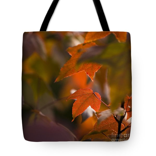 Liquidambar Autumn Tote Bag by Anne Gilbert
