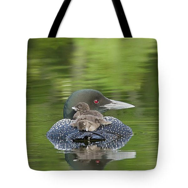 Loon Chicks -  Nap Time Tote Bag by John Vose