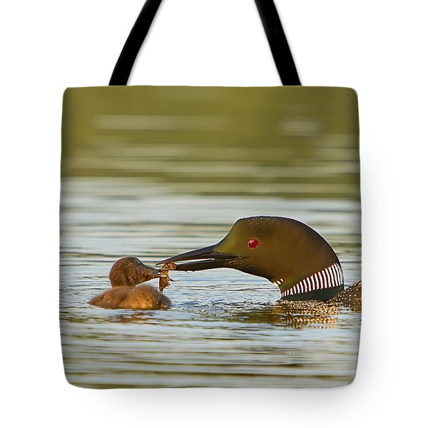 Loon Feeding Chick Tote Bag by John Vose
