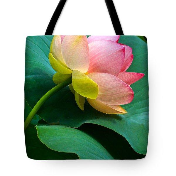 Lotus Blossom And Leaves Tote Bag by Byron Varvarigos