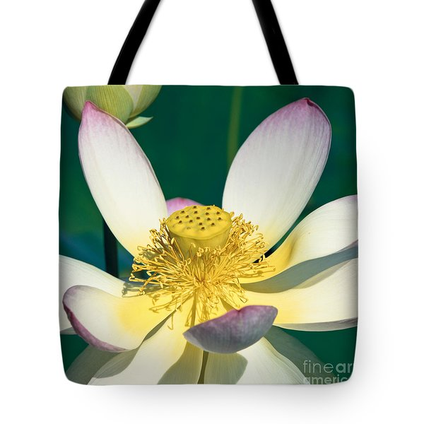 Lotus Blossom Tote Bag by Heiko Koehrer-Wagner