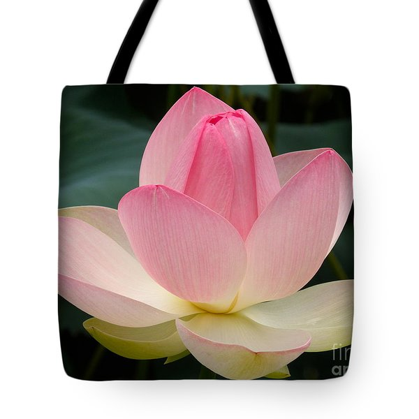 Lotus In Bloom Tote Bag by Byron Varvarigos