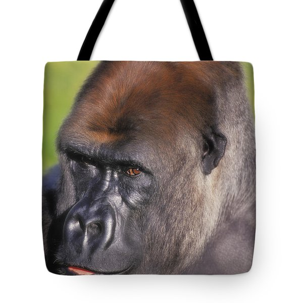 Lowland Gorillaflorida United States Tote Bag by Thomas Kitchin & Victoria Hurst
