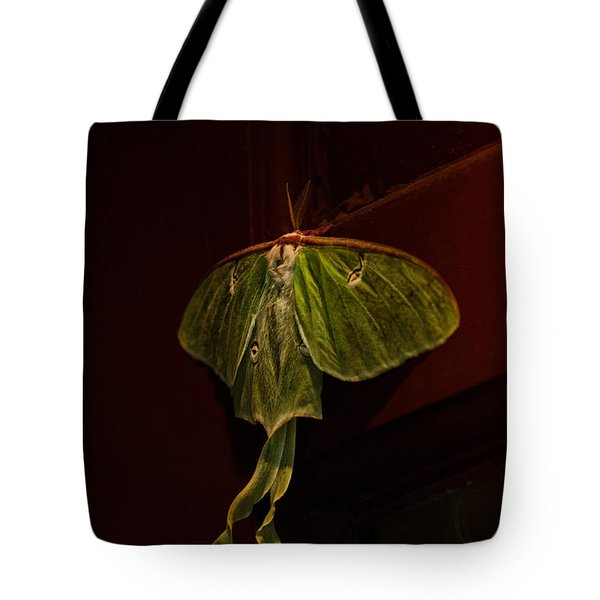 Luna At My Door Tote Bag by Susan Capuano