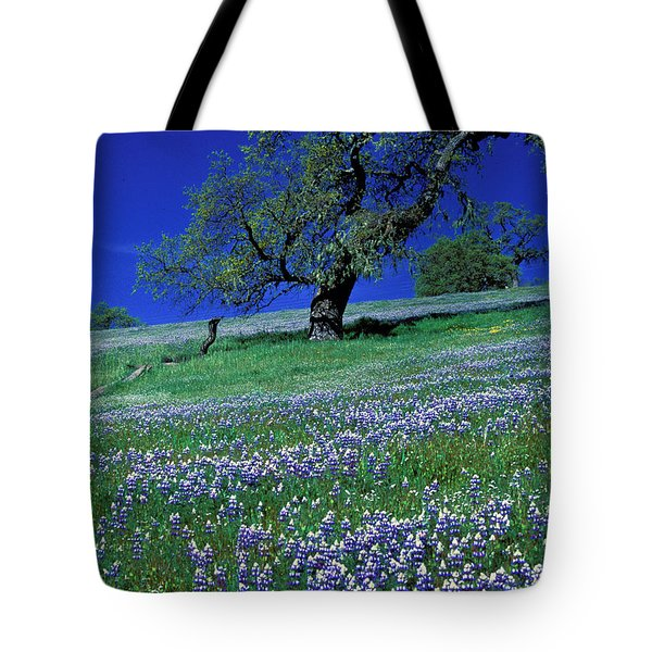 Lupine And The Leaning Tree Tote Bag by Kathy Yates