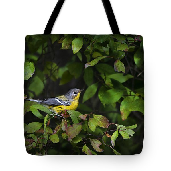 Magnolia Warbler Tote Bag by Christina Rollo
