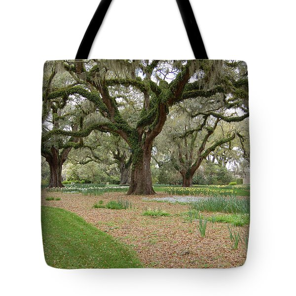 Majestic Live Oaks in Spring Tote Bag by Suzanne Gaff