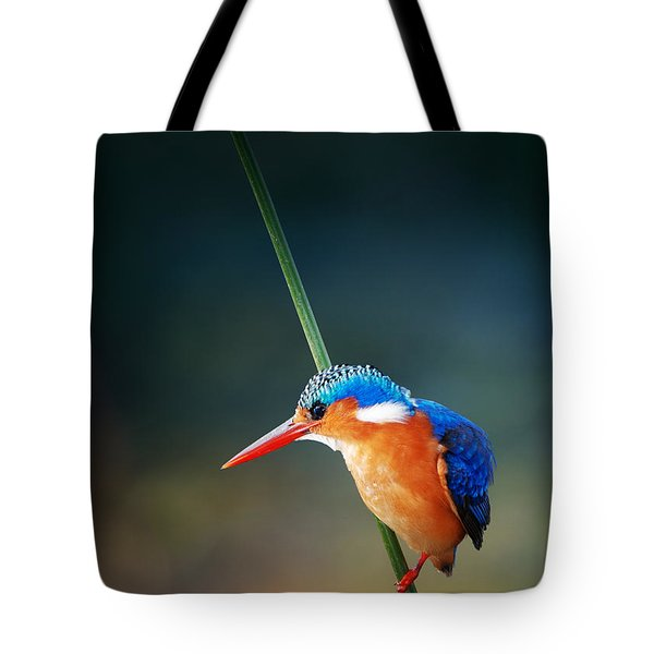 Malachite Kingfisher Tote Bag by Johan Swanepoel