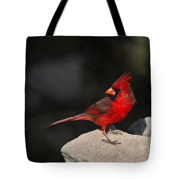 Male Cardinal Tote Bag by Gary Langley