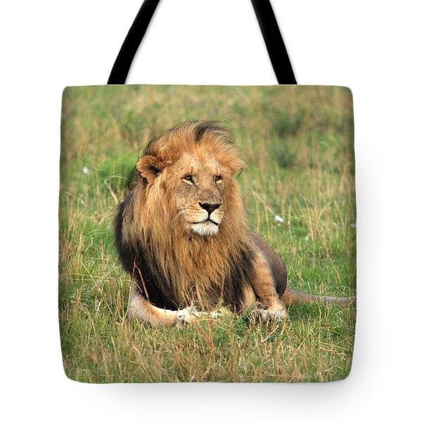 Male Lion On The Masai Mara Tote Bag by Aidan Moran